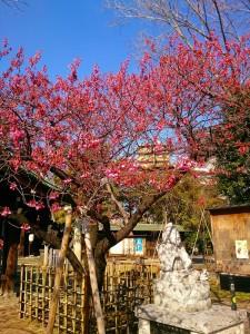 立春 荏原神社にて